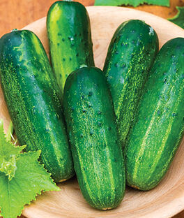 Cucumber, Supremo Hybrid, , large